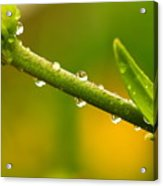 Little Drops Of Rain Acrylic Print