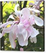 Little English Flower Acrylic Print