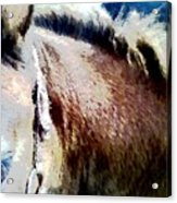 Little Filly Acrylic Print