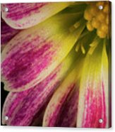 Little Flower Quadrant Acrylic Print