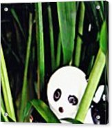 Little Glass Pandas 59 Acrylic Print