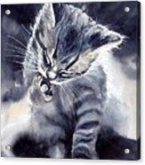Little Grey Cat Acrylic Print
