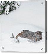 Little Hunter Acrylic Print