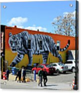 Little India In Jersey City-white Tiger Mural Acrylic Print