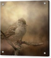 Little Lost Bird Acrylic Print