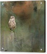 Little Owl On A Fence Acrylic Print