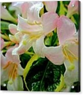Little Pink And White Flowers Acrylic Print