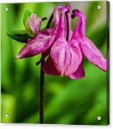 Little Pink Lamp Acrylic Print