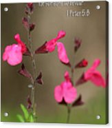 Little Pink Wildflowers With Scripture Acrylic Print