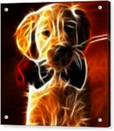 Little Puppy In Love Acrylic Print by Pamela Johnson