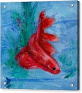 Little Red Betta Fish Acrylic Print by Brenda Thour