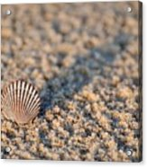 Little Seashell - Jersey Shore Acrylic Print