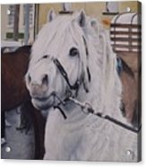 Little Stallion-glin Fair Acrylic Print