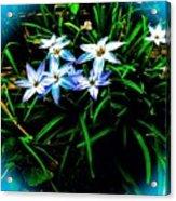 Little Star Wind Flowers Acrylic Print
