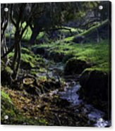 Little Stream Acrylic Print