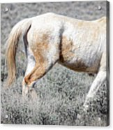 Little Tail Gater Acrylic Print
