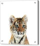 Little Tiger Acrylic Print
