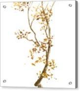 Little Tree 57 Acrylic Print