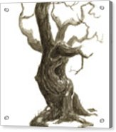 Little Tree 78 Acrylic Print