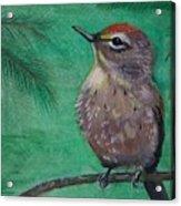 Little Warbler Acrylic Print