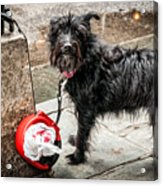 Little Wet Puppy In French Quarter Acrylic Print