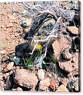 Little Yellow Flower In The Wild Acrylic Print