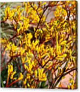 Little Yellow Flowers Acrylic Print