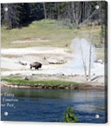 Live Dream Own Yellowstone Park Bison Text Acrylic Print