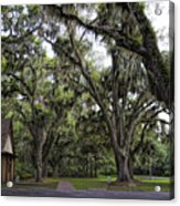 Live Oak And Spanis Moss Landscape Acrylic Print