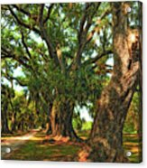 Live Oak Lane Acrylic Print by Steve Harrington