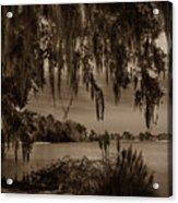 Live Oak Tree Spanigh Moss Sepia Silhouette Acrylic Print