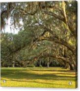 Live Oak Trees Sunrise Acrylic Print