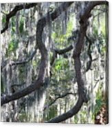 Live Oak With Spanish Moss And Palms Acrylic Print