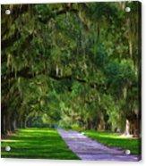 Live Oaks Acrylic Print