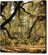 Live Oaks Silhouette Acrylic Print