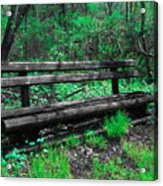 Lively Color Acrylic Print
