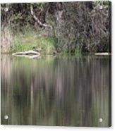 Living On The Pond Acrylic Print