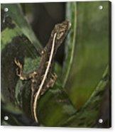 Lizard 2 Acrylic Print