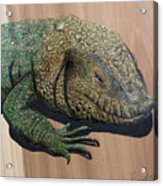 Lizard Art Work Acrylic Print