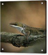 Lizard Deception Wildlife Art Acrylic Print