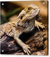 Lizard - Id 16217-202733-1873 Acrylic Print