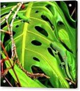 Lizard Licks  Acrylic Print