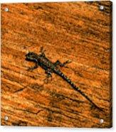 Lizard On Sandstone Acrylic Print