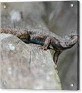 Lizard On Wood Fence Shiloh Tennessee 031620161698 Acrylic Print