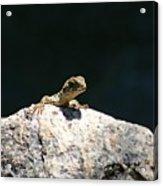 Lizard Rock Acrylic Print