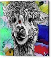 Llama And Lady In Splash Acrylic Print