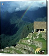 Llama And Rainbow At Machu Picchu Acrylic Print