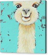 Llama Sue Acrylic Print