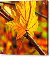 Leaving Autumn Acrylic Print