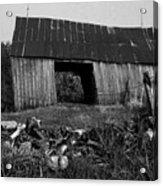 Lloyd-shanks-barn-4 Acrylic Print